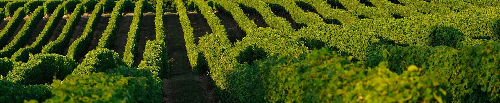 The beautiful Tariquet vineyards of Gascony, South-West France - http://www.tariquet.com/